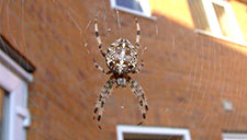 Spider Prevention and Spider Removal