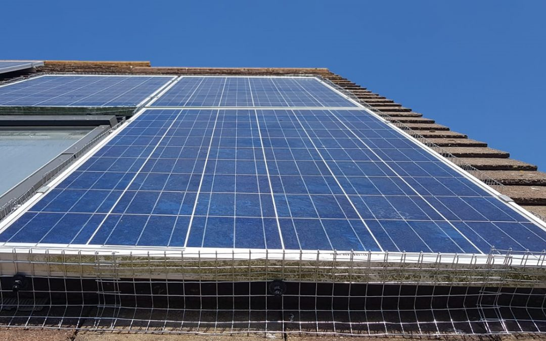 Protect your Solar Panels from Birds – Solar Panel Netting