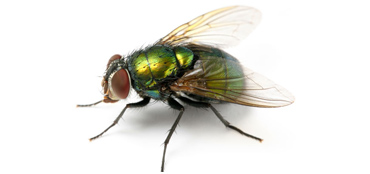 Dealing with flies in Poole Bournemouth Dorset