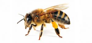 Dealing with bees - Summer Pests