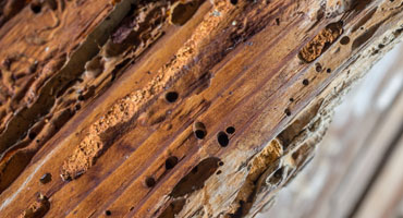 Treating Woodworm in Poole Bournemouth Dorset