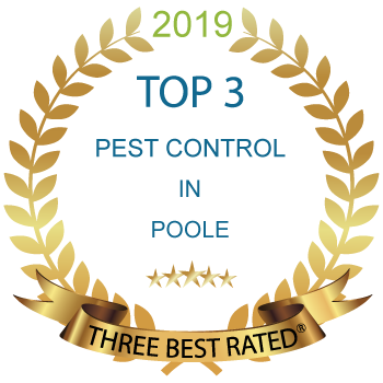 Rated the top 3 Best Pest control specialists in Poole