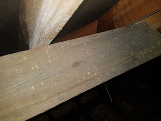 How to identify Woodworm
