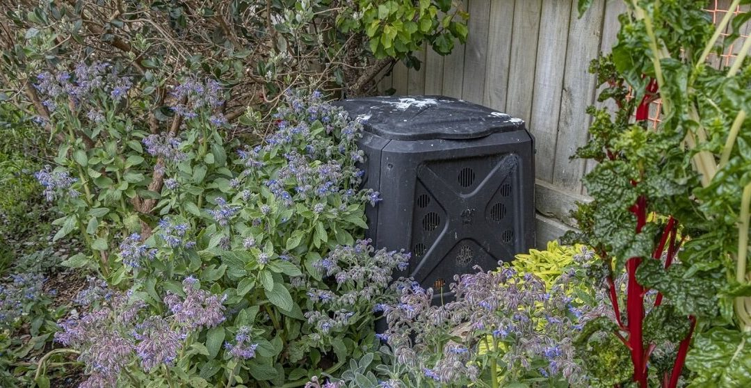 Top Tips To Prevent Rat Infestations