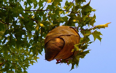 Preventing Wasps & Wasp Nests